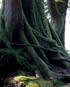 P1100885 roots lev