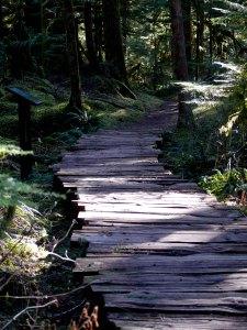 P1100894 new path